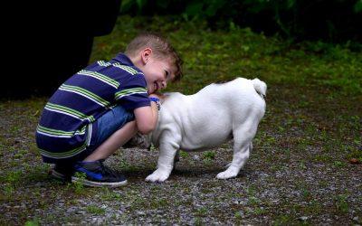 Adopter un animal pour les enfants : bonne ou mauvaise idée ?